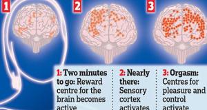 orgasm-brain